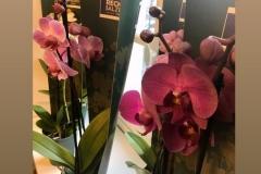 orchidee_2019-5